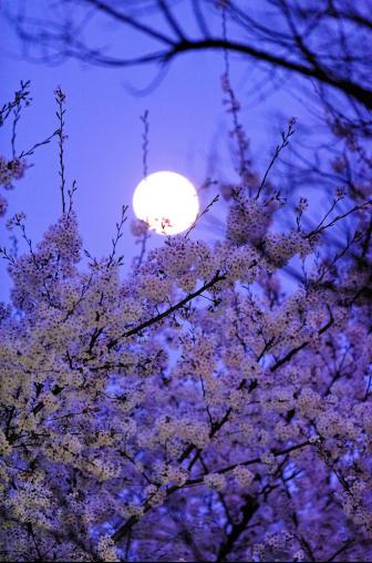 中秋还在抬头望月?二环赏月新姿势高能来袭!831